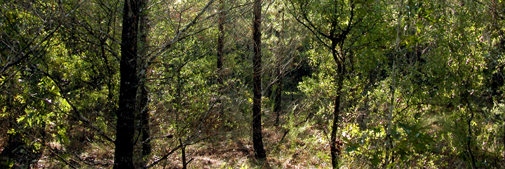 Forest%20panorama.png